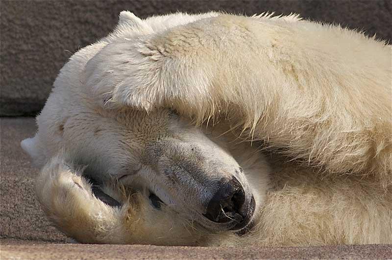 id_brunner_bears_ap_009
