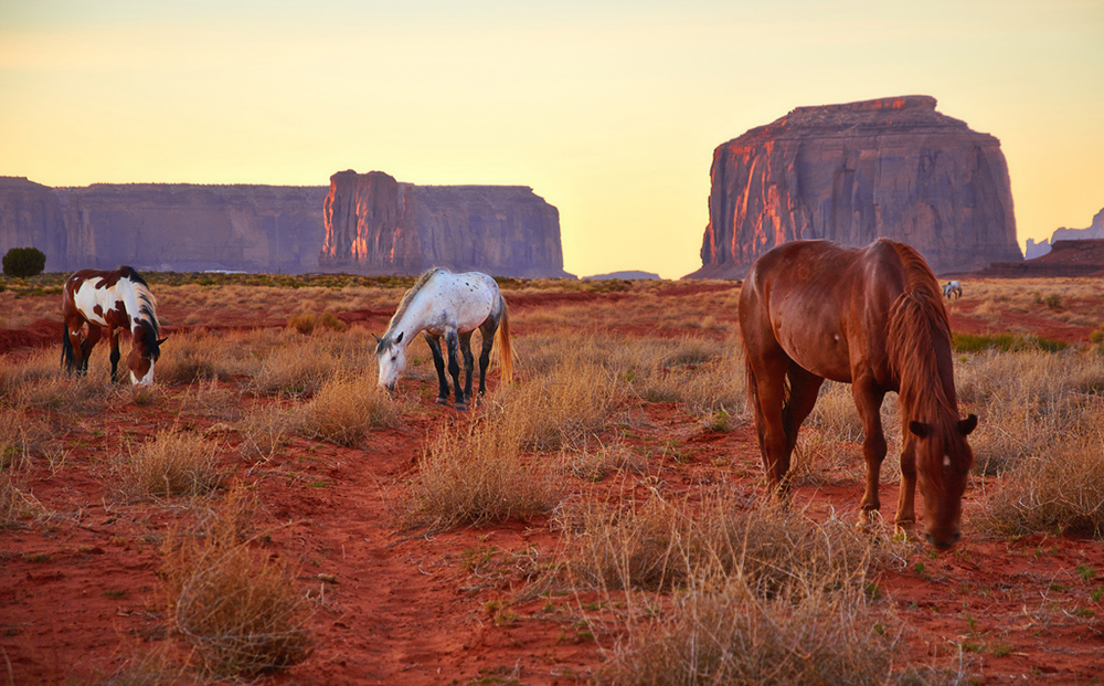 id_engelhard_horses_ap_007