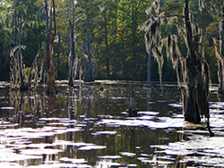 A view of the Bayou