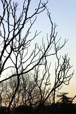 All branch.