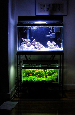 An illuminated, temperature-controlled piece of the living world in the living room.