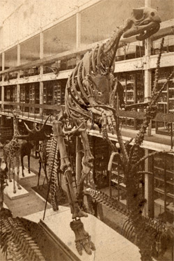 The world's first assembled dinosaur.