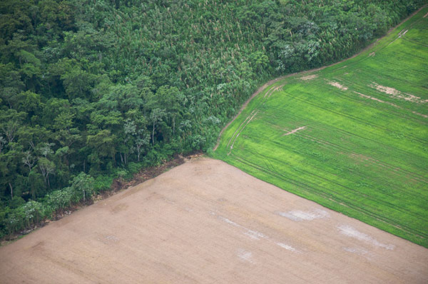 Farming in Bolivia on cleared rainforest