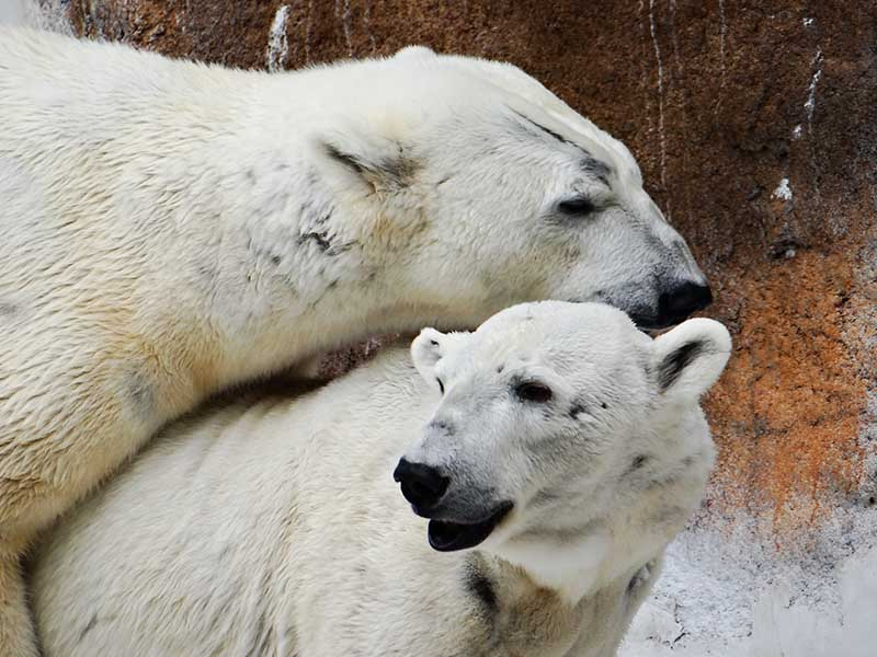 id_brunner_bears_ap_004