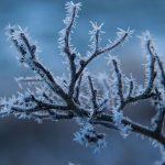 Crystalline Botany