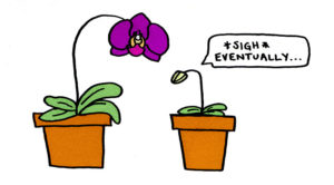 """Orchid bud looking at the bloomed orchid and exclaiming """"*sigh* eventually.."""""""