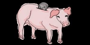 actual pig as a bank