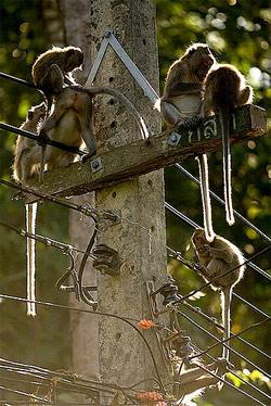 Primate Instincts