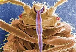 Let the Bedbugs Bite!