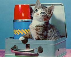 Here Kitty, Kitty, Kitty…