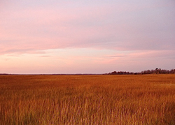 Winter on the Salt Marsh