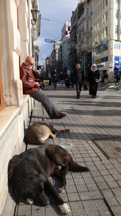 The Wild Dogs of Istanbul